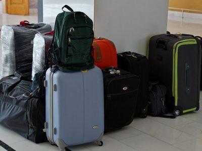 Descoperire șocantă pe aeroportul din Viena: 74 de camelioni într-o valiză