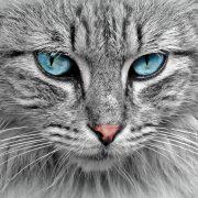 Adopție pisici: ce trebuie să știi înainte de a avea o felină