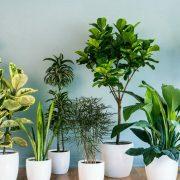 Cum îți decorezi casa cu plante, iarna. Culorile nu trebuie să lipsească