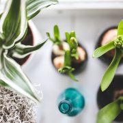 Plante de apartament. Care sunt florile cel mai ușor de întreținut