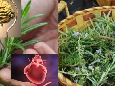 Cea mai puternică plantă, bună pentru creier, inimă, vase, piele, păr și siluetă – Te scăpa și de stres