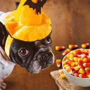 Ce nu au voie să mănânce câinii. Alimente total interzise pentru patrupezi