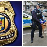 Ce salarii au angajații de la Poliția Animalelor cu tot cu bonusuri și sporuri