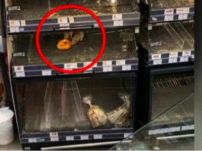 Imagine revoltătoare dintr-un supermarket din sectorul 1. Șobolanii mănâncă de pe rafturi