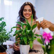 Plante de apartament. Cum le alegi pe cele care îți aduc fericirea în casă